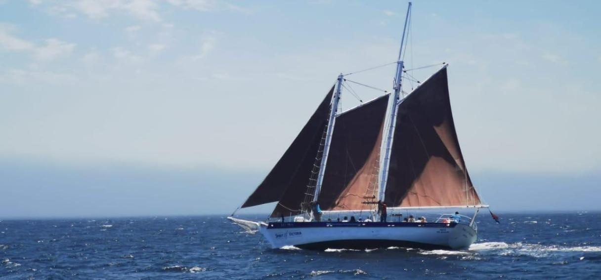 One Hour Schooner Cruise in Cape Town-5