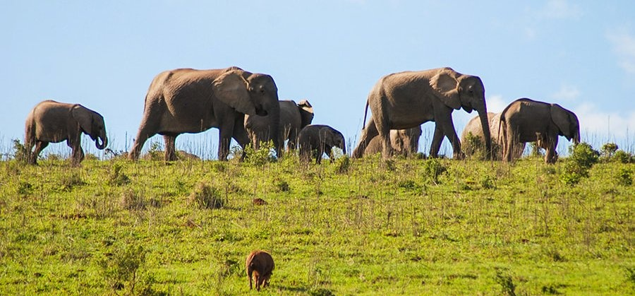 Full Day Safari - Addo National Park-2