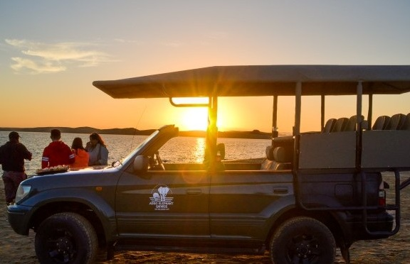Beach Safari With Tour and Sunset in Port Elizabeth.jpg