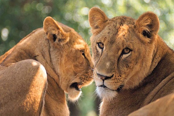 Big Five Safari Experience With Cape Town Transportation-1