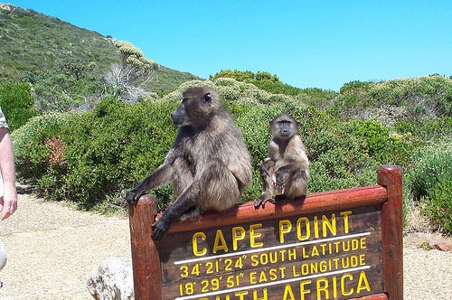 Cape Point Tour With Cape Town Transport-1
