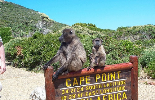Cape Point Sightseeing Tour.jpg