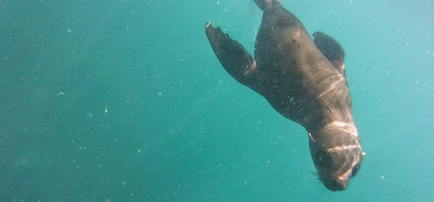 Snorkel With Seals in Cape Town-4