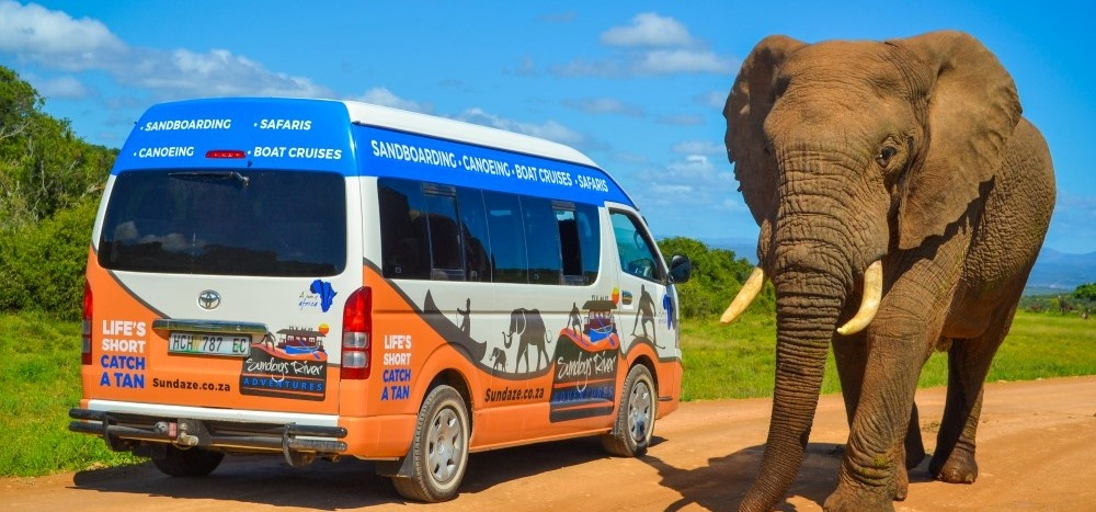 Full Day Safari - Addo National Park-6