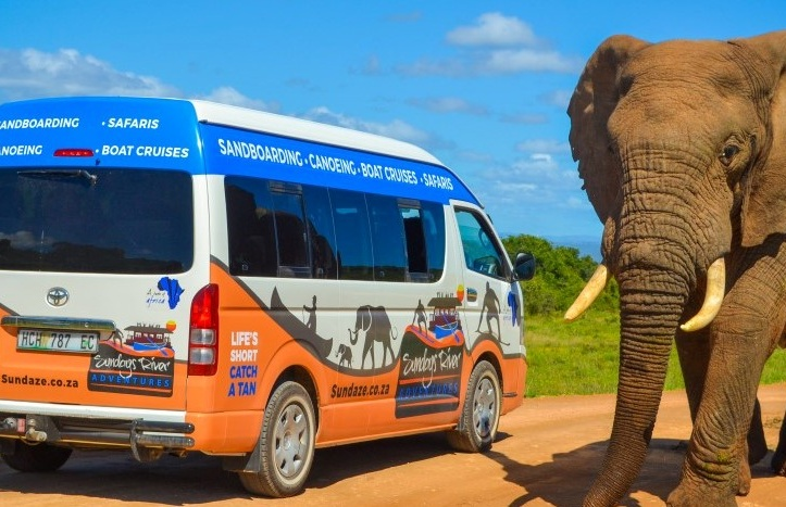 Closed Vehicle Half Day Animal Safari in Addo.jpg