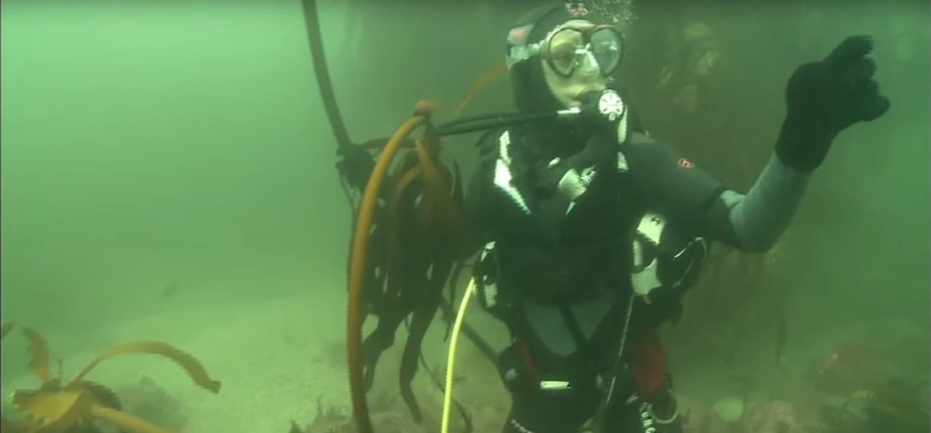 Cow Shark Diving Experience - False Bay-3