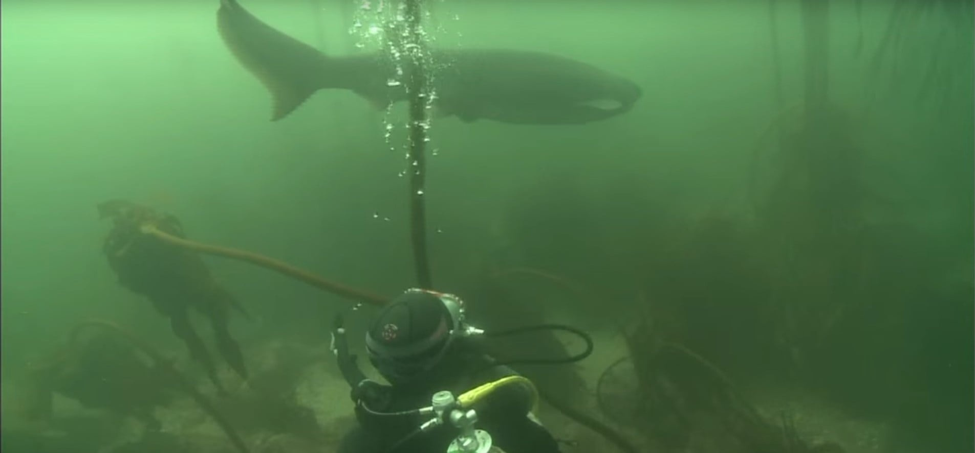 Cow Shark Diving Experience - False Bay-2