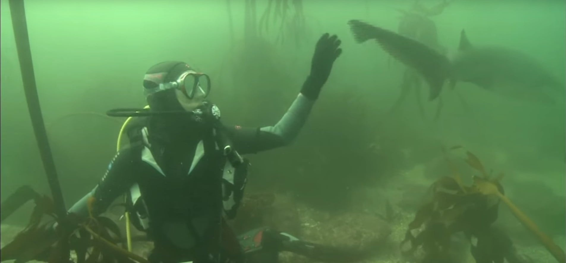 Cow Shark Diving Experience - False Bay-1