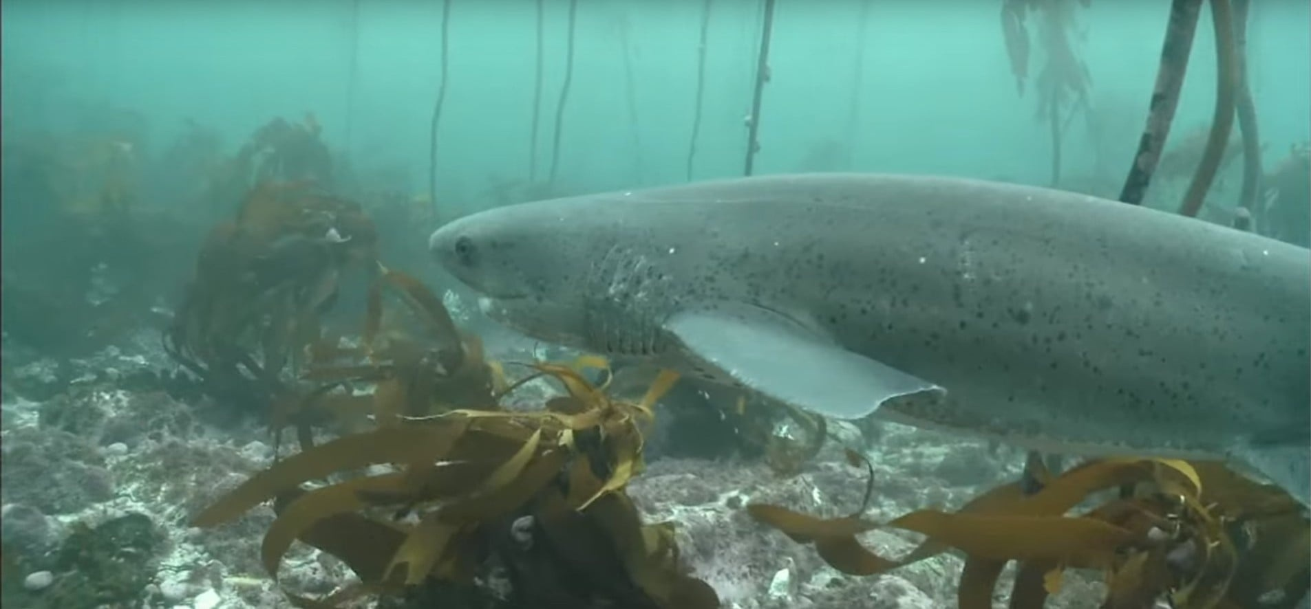 Cow Shark Diving Experience - False Bay-5