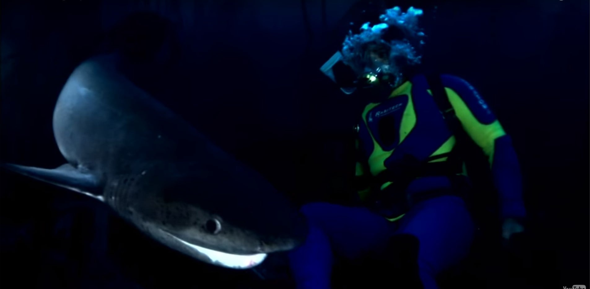 Cow Shark Diving Experience - False Bay-4