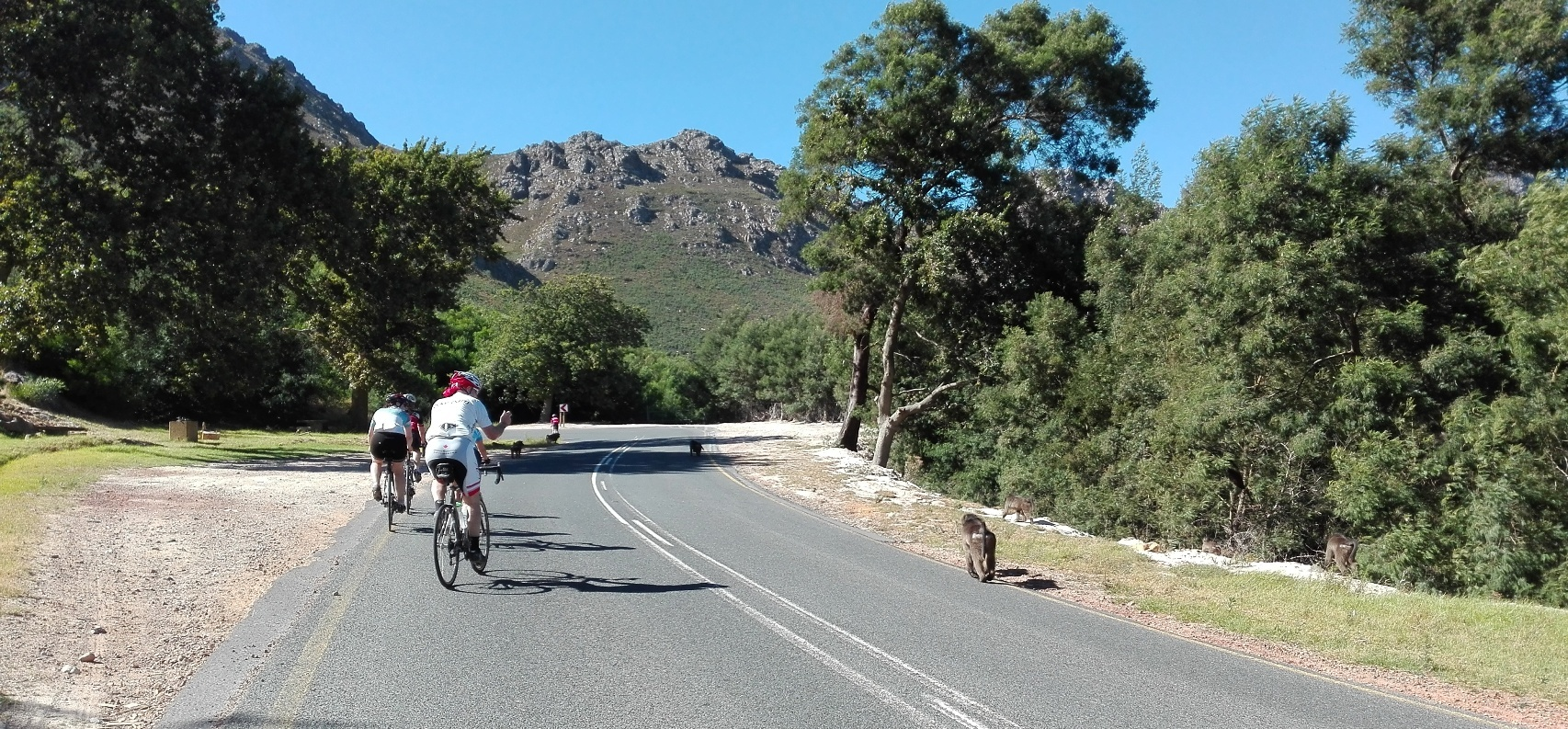 Cape Peninsula Bike Tour for 2-4