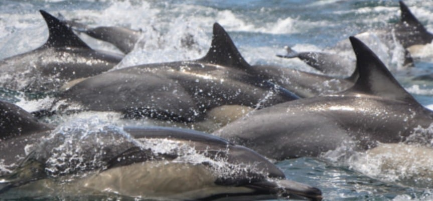Dolphin Watching Excursion - Plettenberg Bay-2