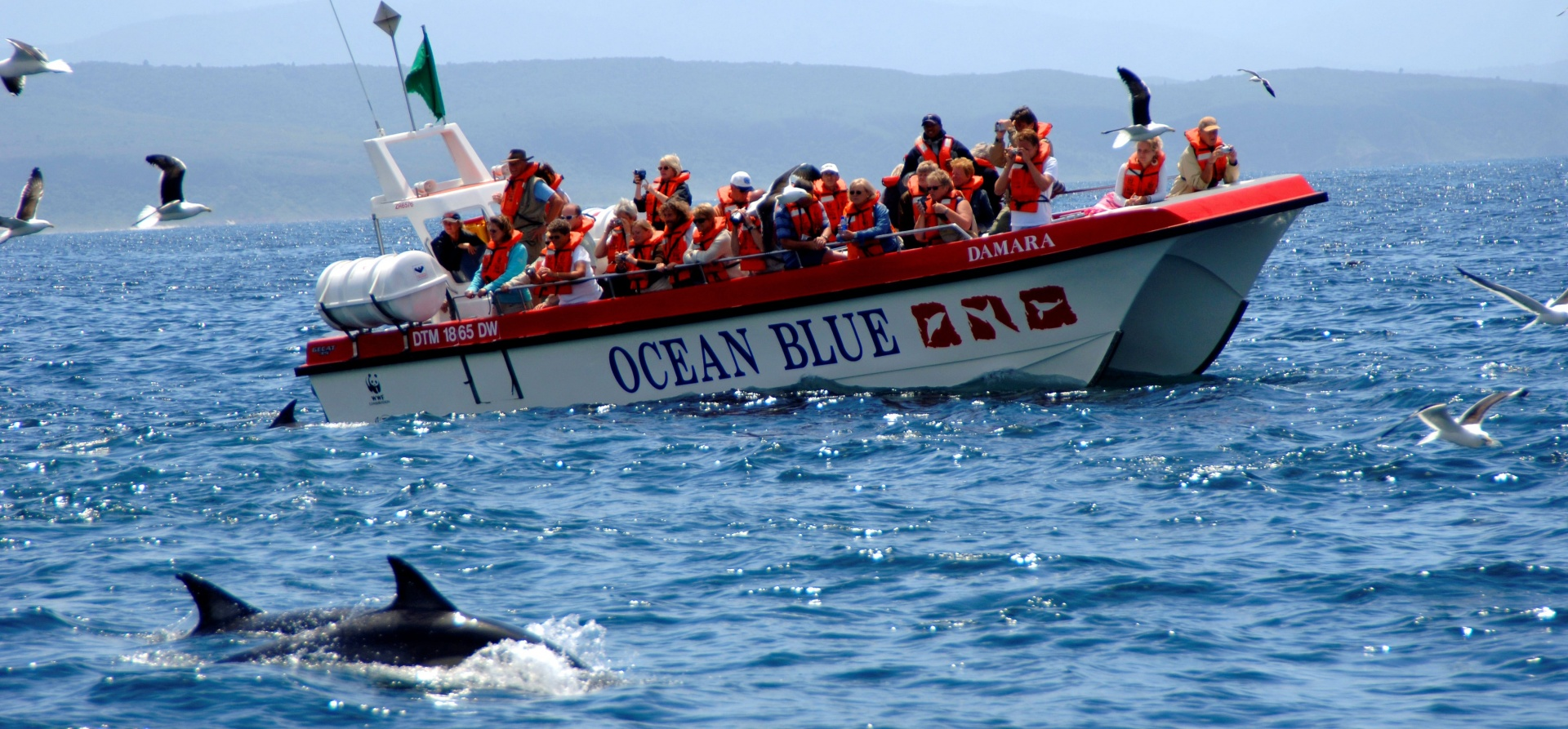 Dolphin Watching Excursion - Plettenberg Bay-1