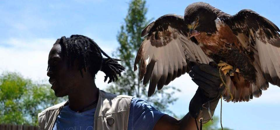 Wahlberg's Eagle Encounter in Stellenbosch, Cape Town-5