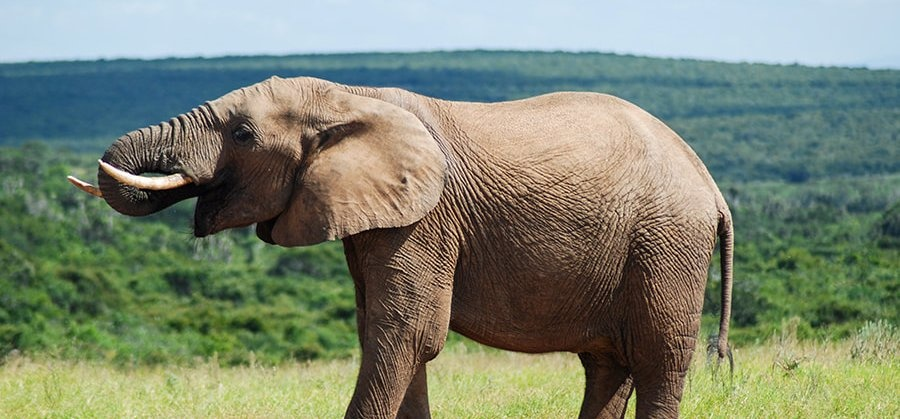Full Day Safari in Addo National Park - Child-9