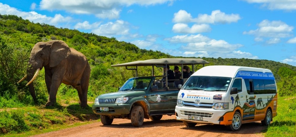 Full Day Safari - Addo National Park-1