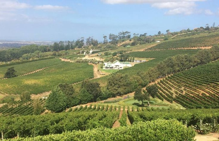 Full-Day-Constantia-Wine-Tasting-Tour.jpg