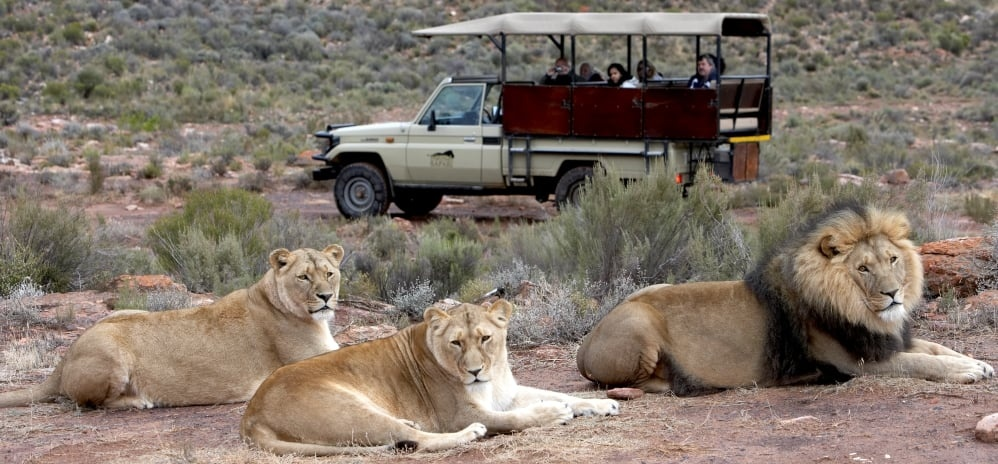 Full Day Safari and Lunch in Touws River-1