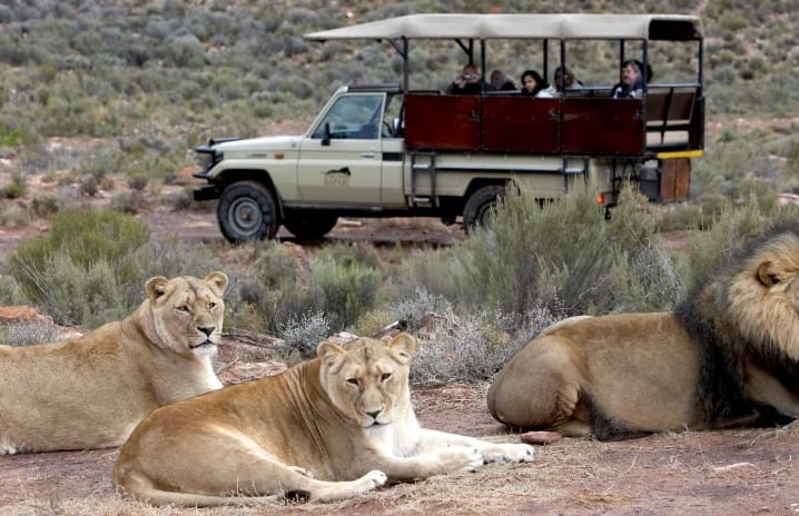 Full-Day-Safari-and-Lunch-in-Western-Cape-Touws-River-big.jpg