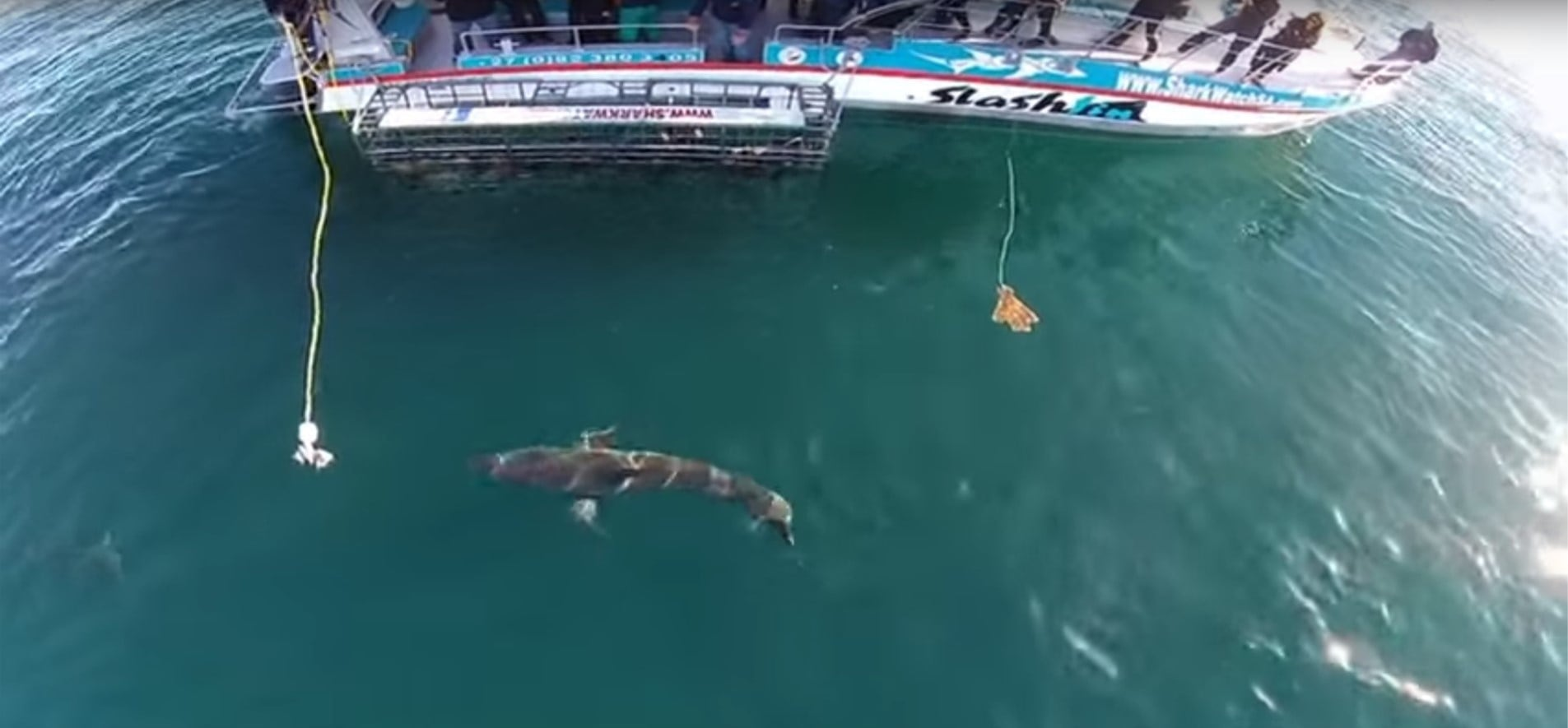 Great White Shark Cage Diving - False Bay-1