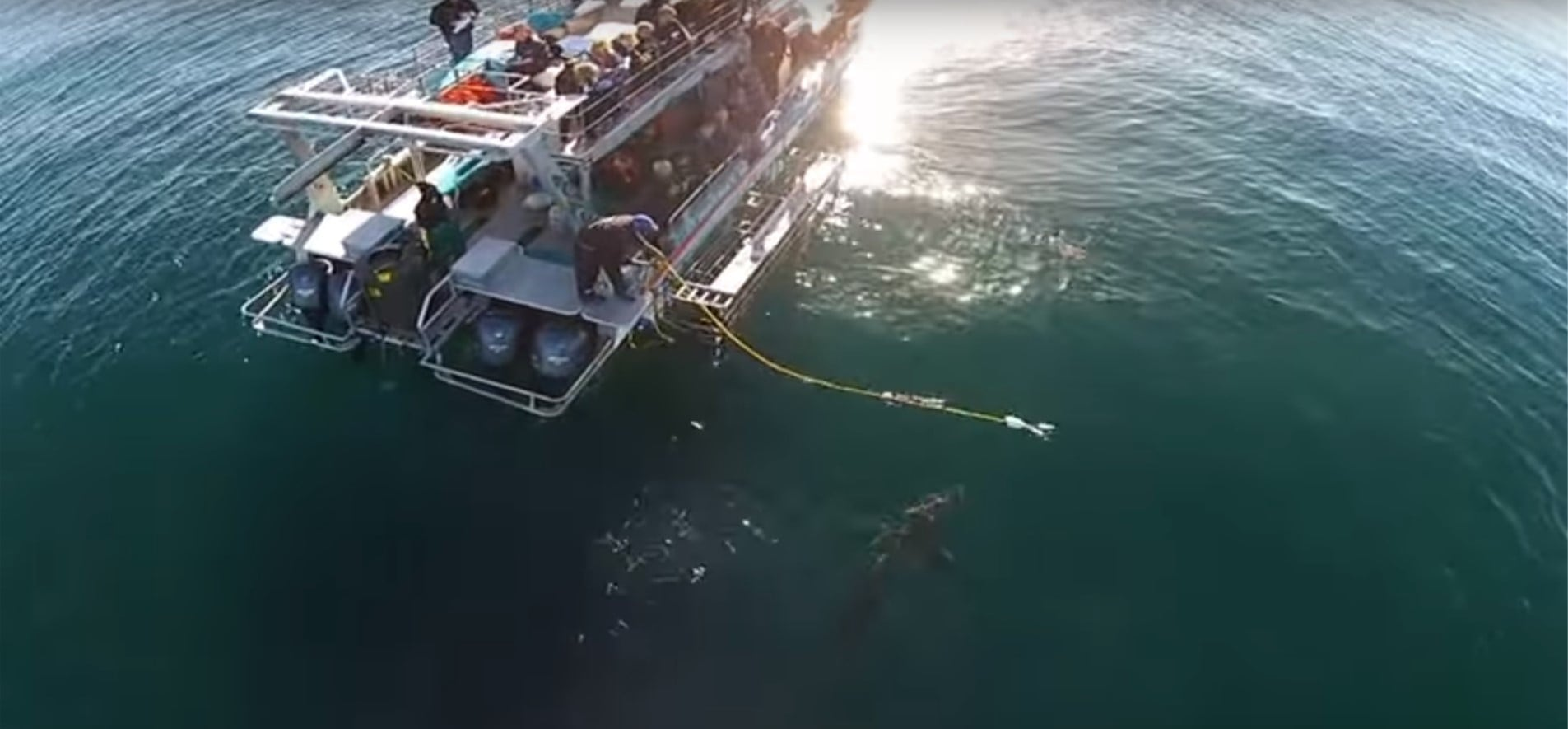 Great White Shark Cage Diving - False Bay-5
