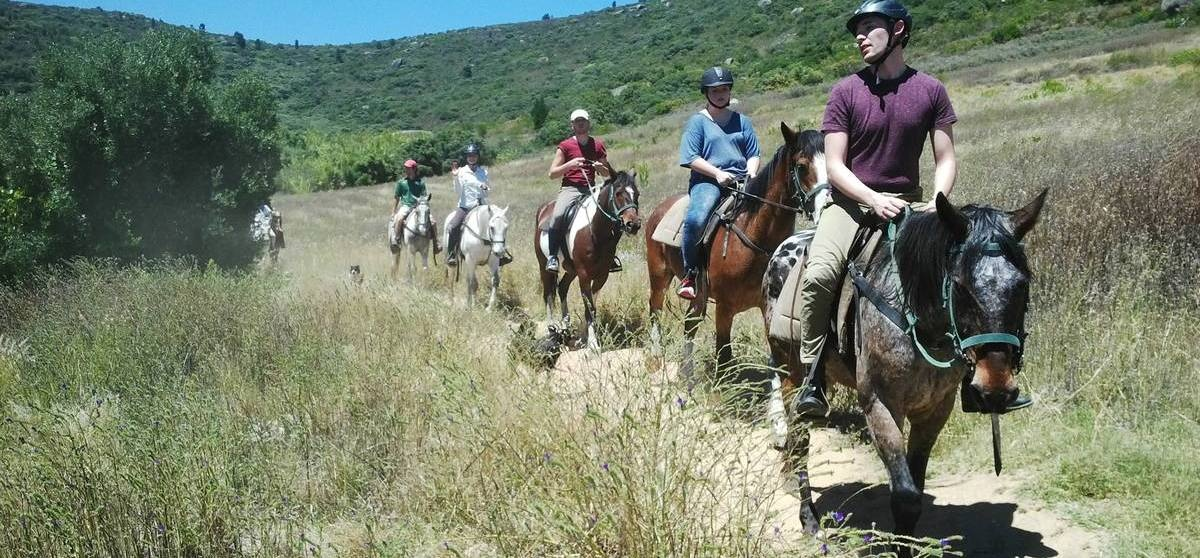 Half Day Horse Riding and Wine Tasting in Paarl-2