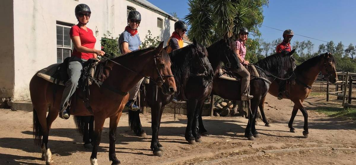 Half Day Horse Riding and Wine Tasting in Paarl-9