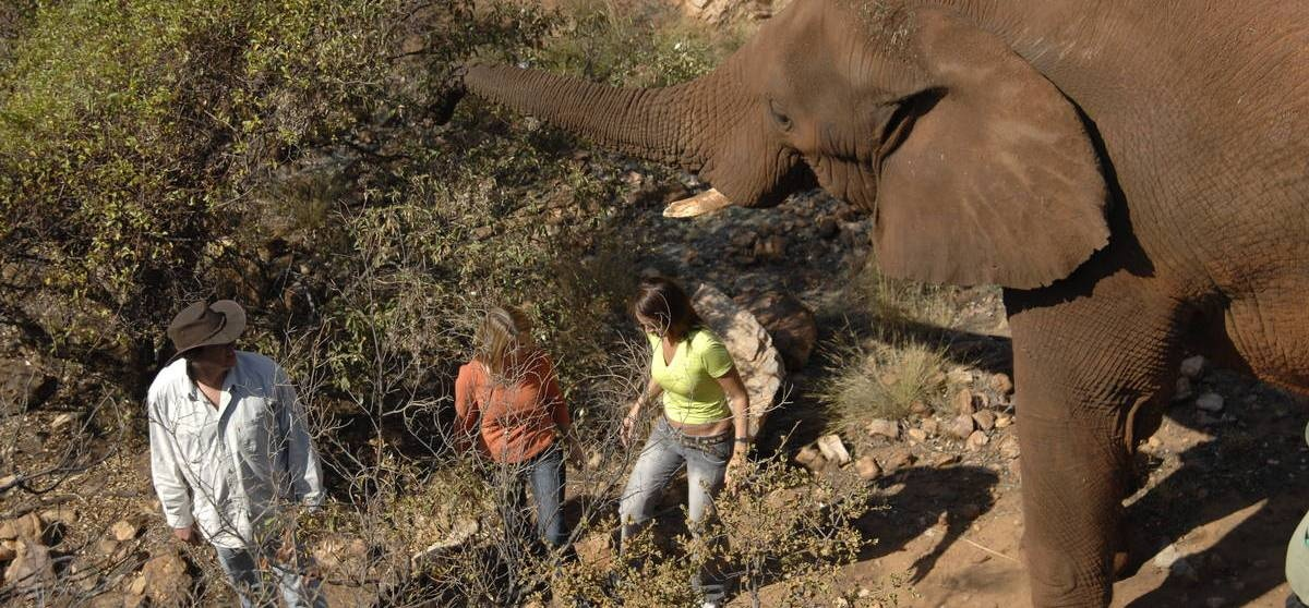 Hartbeespoort Elephant Encounter & Monkey Sanctuary Tour-4