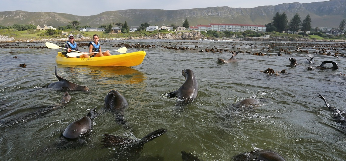 Sea Kayaking Experience in Hermanus-6