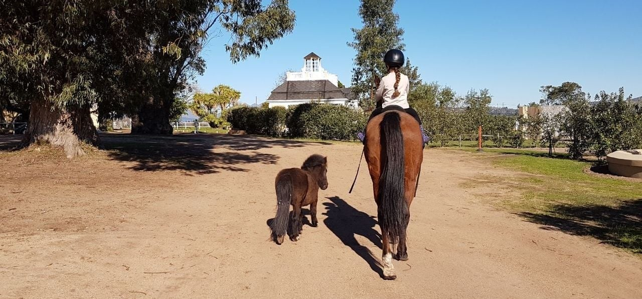 Two Hour Horse Riding With Beer Tasting in Stellenbosch-1