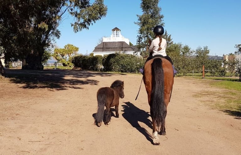 Horse-Riding-With-Beer-Tasting-in-Stellenbosch-big.jpg