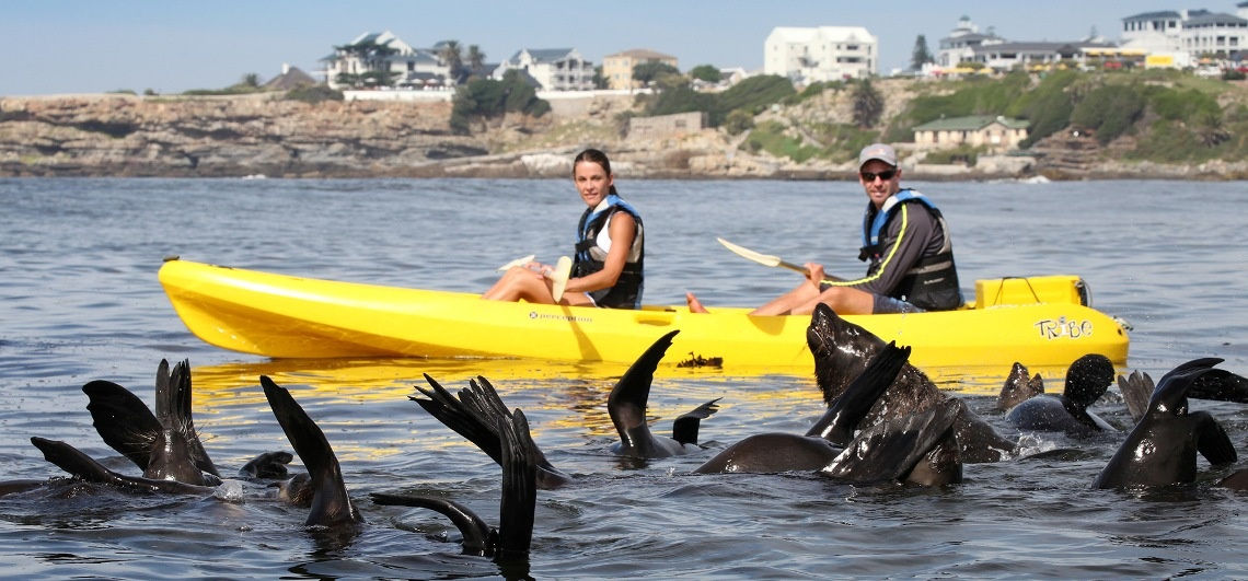 Sea Kayaking Experience in Hermanus-2