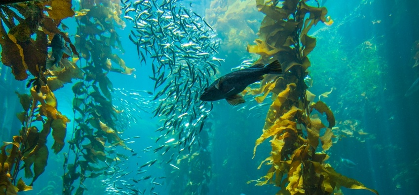 Kelp Forest Diving Experience - Simon's Town-3