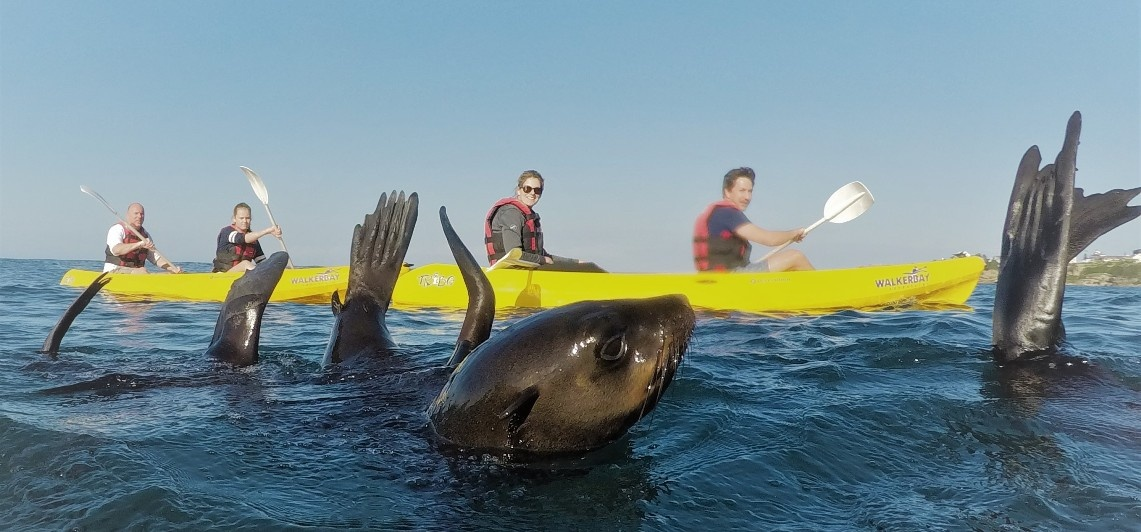 Sea Kayaking Experience in Hermanus-5