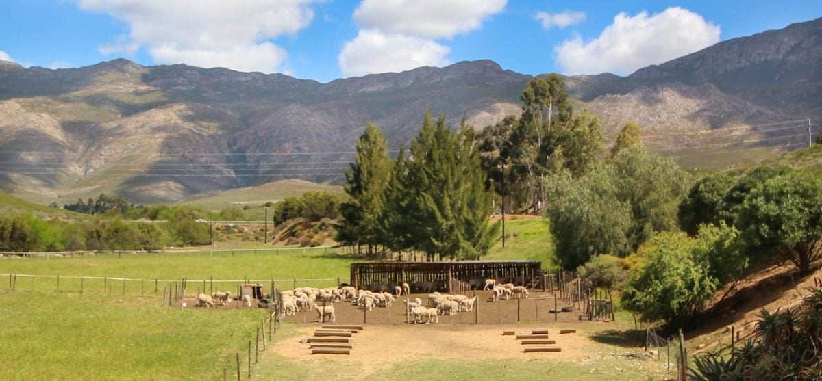 Overnight Cottage Break For Two in Montagu Western Cape-12