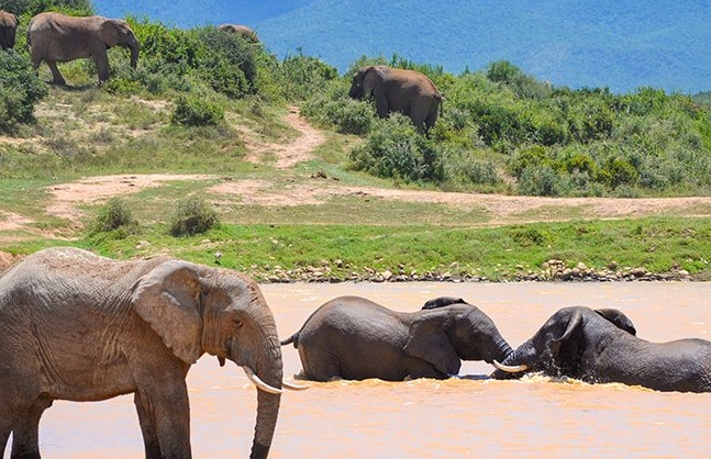 Nature Reserve Port Elizabeth Half Day Safari Kids Ticket.jpg