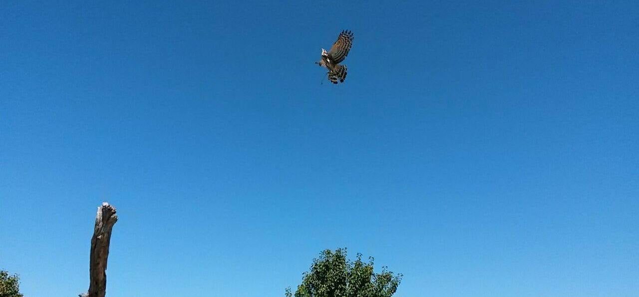One Hour Falconry Hawk Walk in Cape Town-4