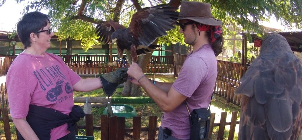 One Hour Falconry Hawk Walk in Cape Town-8