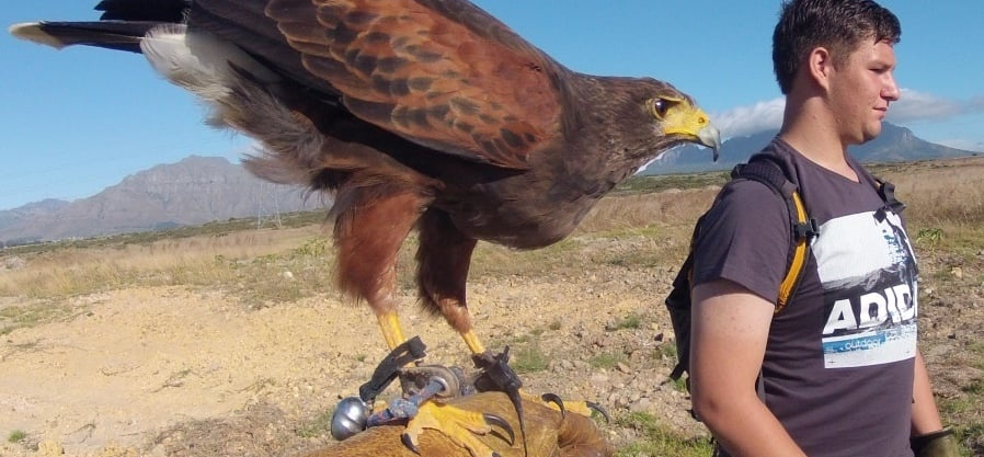 One Hour Falconry Hawk Walk in Cape Town-9