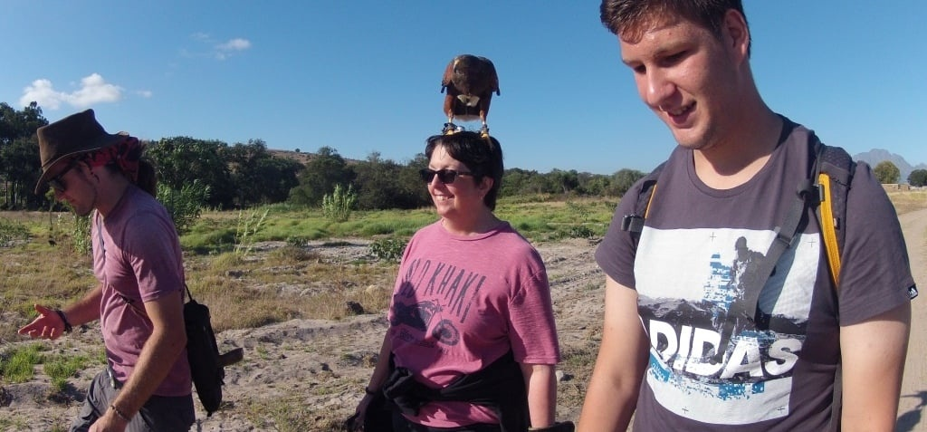 One Hour Falconry Hawk Walk in Cape Town-6