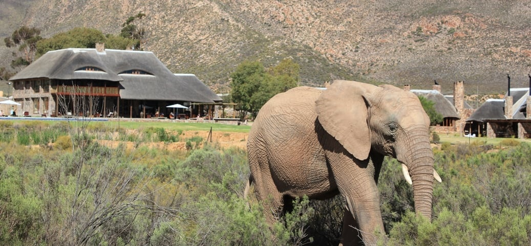 Overnight Spa Break For Two with Game Drives in Touws River-10