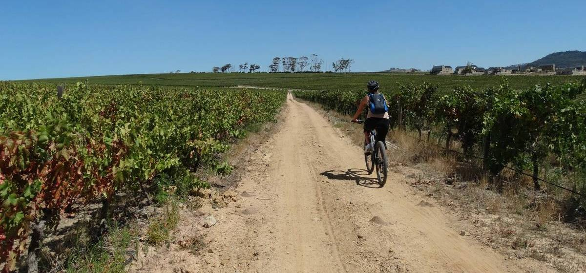 Platinum Stellenbosch Bike Tour & Wine Tasting For Two-3