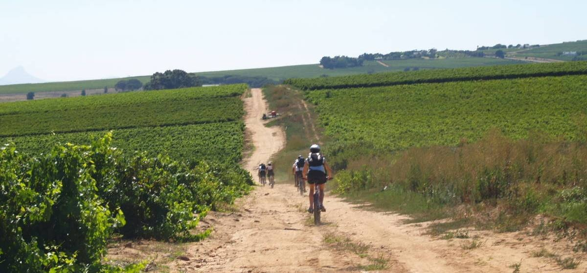 Platinum Stellenbosch Bike Tour & Wine Tasting For Two-1