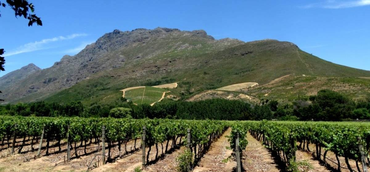 Platinum Stellenbosch Bike Tour & Wine Tasting For Two-4