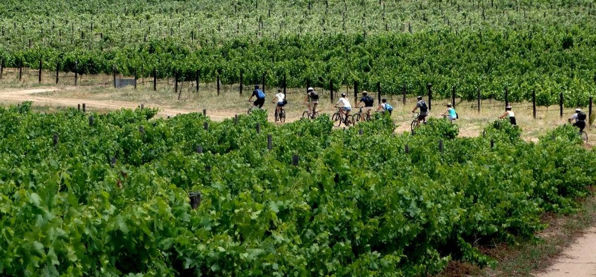 Platinum Stellenbosch Bike Tour & Wine Tasting For Two-5