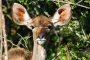 /images/Port Elizabeth Nature Reserve Safari Full Day Childrens Ticket-1920x1080-resize.jpg