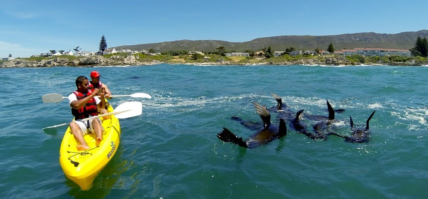 Sea Kayaking Experience in Hermanus-3