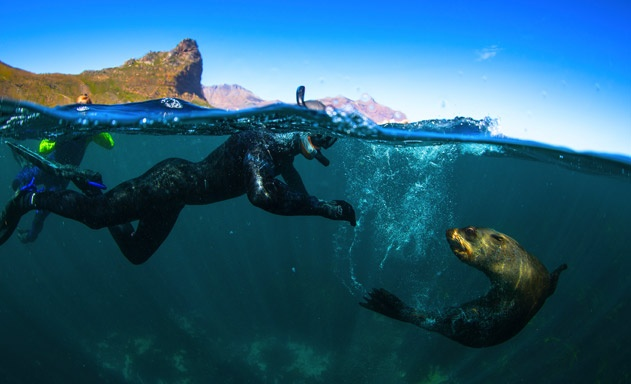 Snorkel With Seals at The V&A Waterfront-1
