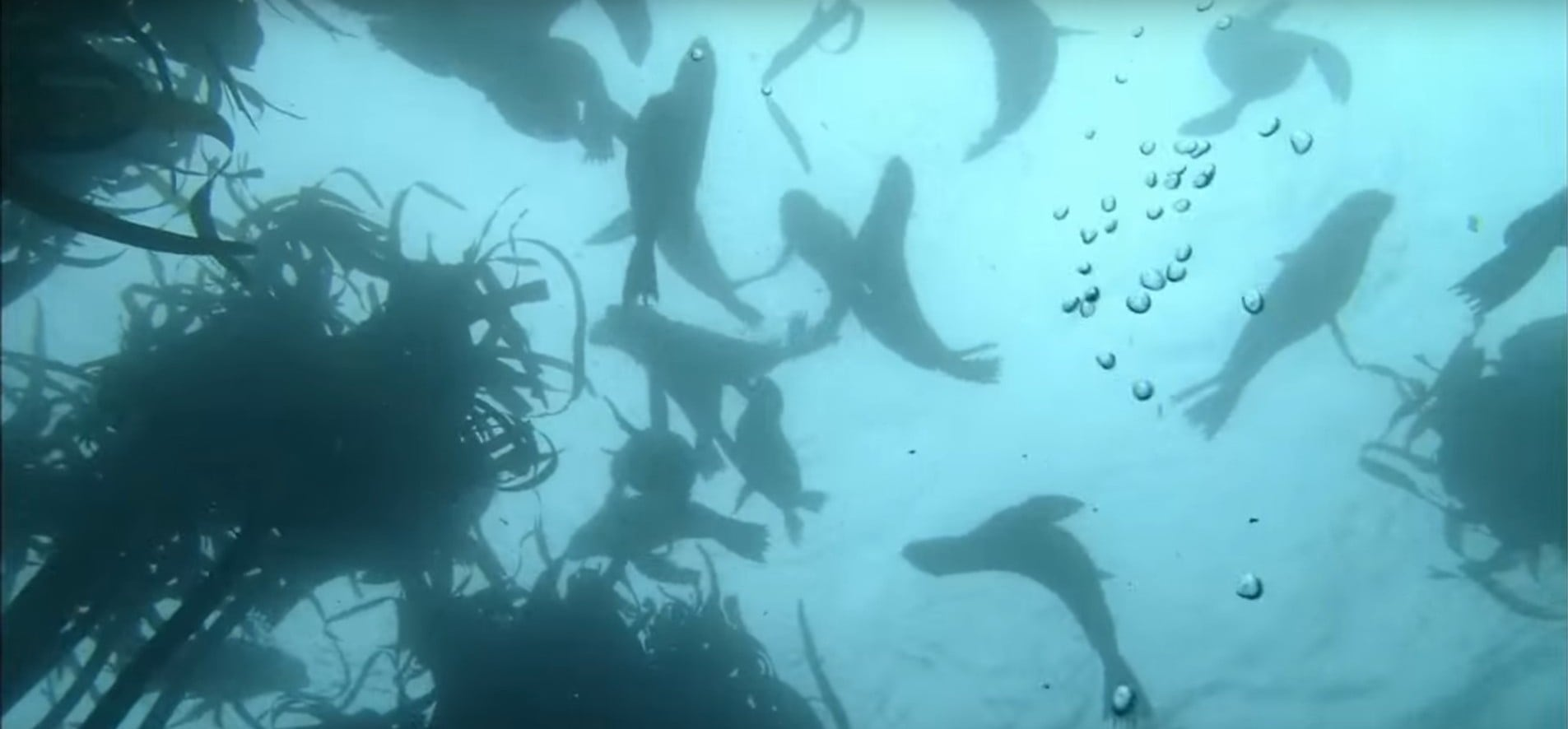 Snorkelling With Seals - False Bay-3