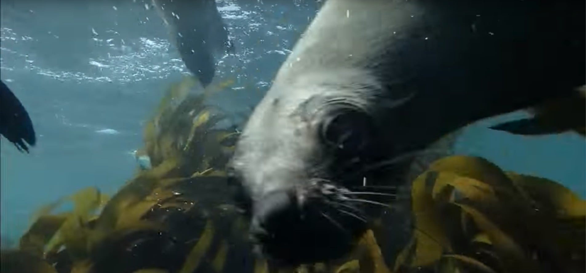Snorkelling With Seals - False Bay-4